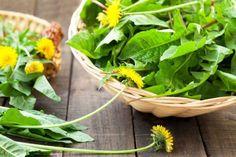 Dandelion Leaves, Dandelion Flower, Dandelion Salad, Herbal Remedies, Home Remedies, Natural Remedies, Ayurvedic Diet, Ayurveda, Vegetable Garden