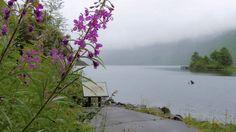 via makeagif Flowers & Leaves