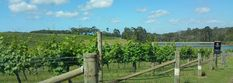 Aravinia Vineyard WA