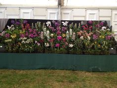 Our display at Hampton Court Flower Show 2014