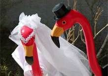 bride and groom flamingo - Bing Images