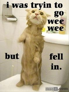 poor kitty, now has a lifelong fear of toilets....