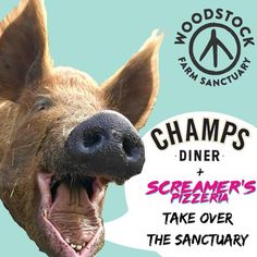 22 DAYS UNTIL PIZZA AND PANCAKES. Who plans on joining us for the @screamerspizzeria and @champsdiner takeover?