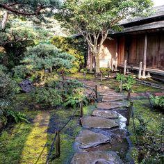 Can this just be my yard?  #shoinhouse #Chicagobotanicgarden #mossgarden #moss #green #plants #japanesegarden #Illinois