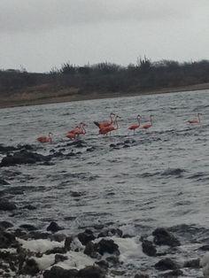 Flamingo's bij de zoutpannen