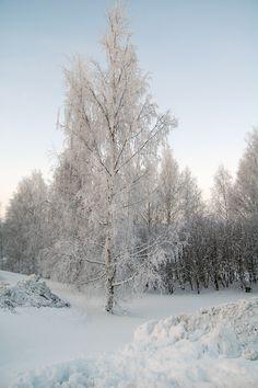 Rovaniemi: un viaggio nella Lapponia finlandese  http://www.piccolini.it/post/536/rovaniemi-un-viaggio-nella-lapponia-finlandese/