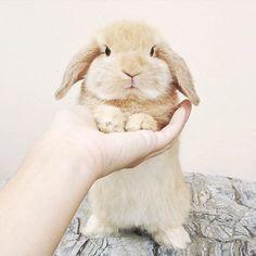 """Animals op Instagram: """"Baby Bunny!  Photo by: @noellethebunny #babyanmlpics"""""""