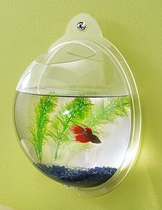 Wall Mount Fish Bowl -- Totally getting this for Wes for Christmas! We can have a fish without giving up any precious counter space!