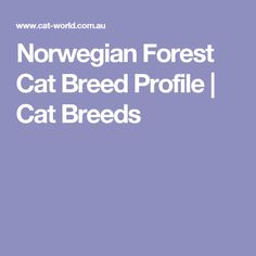 Norwegian Forest Cat Breed Profile   Cat Breeds