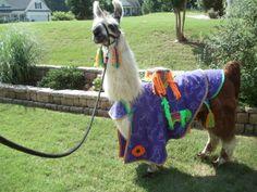 Llama Twist is wearing the purple cape costume that I made.