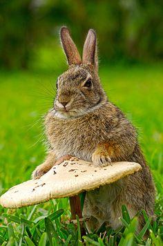 rabbit and mushroom