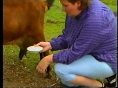 Rapid Mastitis Test in a Milking Goat - how to do it and what a positive test looks like - by #goatvet