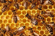 Rețete dietetice: Mierea contrafăcută