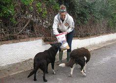 Almo Nature e Gaia Animali & Ambiente insieme per un rifugio di Carini (PA)