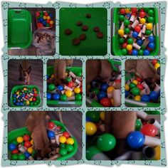 Can do ball pit with cheap dollar store wiffle balls and a laundry basket Dog Enrichment, Enrichment Activities, Brain Games For Dogs, Dog Games, Diy Dog Toys, Dog Puzzles, Puppy Play, Toy Puppies, Dog Agility