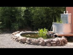 Stock tank fish pond -with stock tank filter - Peaceful serenity - YouTube
