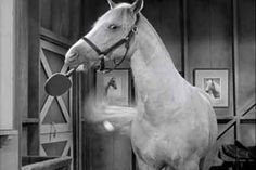 mister Ed playing ping pong