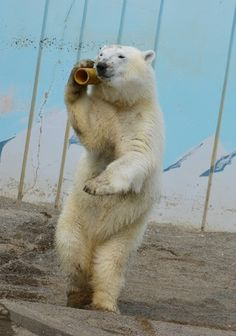 Hello? Yes, this is Polar Bear!