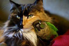 Katze und Vogel kuscheln zusammen.