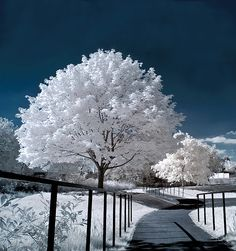 Inspiration For Landscape photography Picture Description A Showcase of 20 Absolutely Amazing Landscape infrared Photography… Winter Szenen, Winter Magic, Winter Time, Winter Christmas, Winter Walk, Thanksgiving Holiday, Infrared Photography, Tree Photography, Landscape Photography