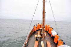 Les dauphins et baleines à armes égales avec les braconniers