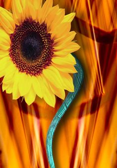 How to Make Paper Sunflowers (with Pictures)   eHow