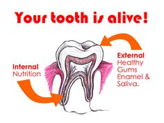 Your Tooth is Alive!