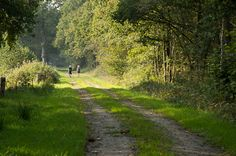 Stiltewandeling Westervelde (5,6km) Een mooie wandelroute door het uitgestrekte en rustige natuurgebied van beekdal De Slokkert bij Westervelde. Een stukje natuur waar u kunt genieten van rust en stilte.
