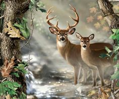This RealTree exclusive panel features a buck and doe in the woods. Great for wall hangings or central panels for larger quilts, or other custom needlework/fabric painting. Deer Photos, Deer Pictures, Wildlife Quilts, Wildlife Art, Animals And Pets, Cute Animals, Deer Fabric, Deer Art, Tier Fotos