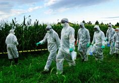 Italy to Ban Monsanto GMO Corn with 80% Public Support | World Truth.TV
