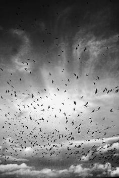 Gulls+Crows: endgame by *Coigach on deviantART