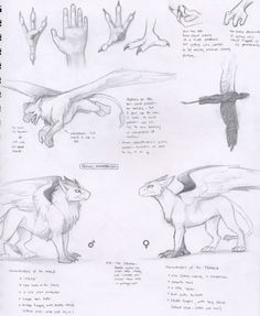 Fantasy Creatures, Mythical Creatures, Gryphon Tattoo, Griffin Mythical, Animal Sketches, Drawing Reference, Griffins, Concept, Drawings
