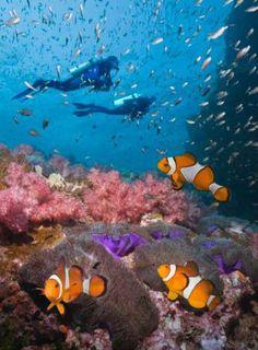 Andaman sea scuba diving