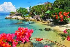 Welcome to Stay in Minang Cove in Pulau Tioman!