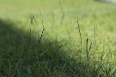 假檢草不割的話會越長越長。