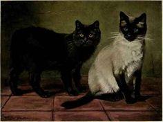 Black-Manx-And-Royal-Siamese-Cats.jpg