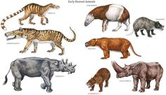 Hooved Animals