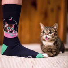 Catster Gift Guide: For the Fashion-Forward Cat Lady Funny Animals, Cute Animals, Funny Pets, Nine Cat, What Cat, Cute Bags, Crazy Cats, Cool Cats, Cat Lady