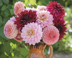 Woolmans new dahlia collections for 2018