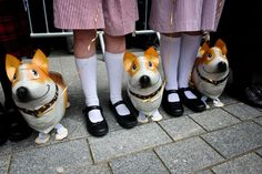 Inflatable corgies for the Queen's visit to Exeter. Fantastic!