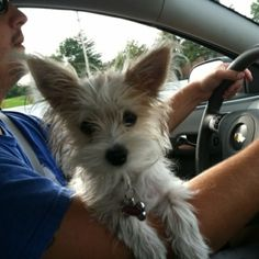 puppy by TinyCarmen