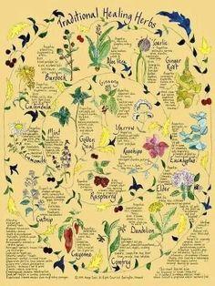 Traditional healing herbs