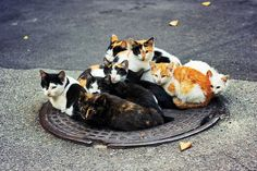 We claim this manhole for all catkind!