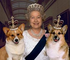 Queen Elizabeth II and a couple of royal dogs...I think she has a good sense of humour...