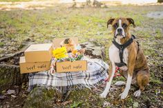 Win a Wet Nose Box with Natural Treats, Chews + Toys!