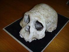 Ce crâne d'hominidés (ici une réplique) a été mis au jour à Dmanisi, un site archéologique se situant à 85 km de Tbilissi, la capitale de la Géorgie. Il appartient à une espèce dont l'existence reste débattue : Homo georgicus. © Gerbil, Wikimedia Commons, cc by sa 3.0