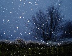 Image detail for -. snow winter night snowfall beautiful snow against the blue night sky Winter Images, Winter Pictures, Nature Pictures, Beautiful Pictures, Snow Night, Winter Night, Winter Love, Winter Snow, Winter Art