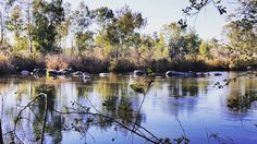 The Vaal River, Parys: Free State Free State, South Africa, Southern, Urban, River, Rivers