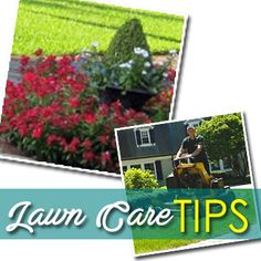 Lawn Care Tips, Take Care, Home Improvement, Landscaping, Detail, Yard Landscaping, Landscape Architecture, Home Improvements, Garden Design