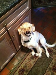 This dog who's just…he JUST CAN'T. HE CANNOT. handle life right now. | 33 Dogs That Cannot Even Handle It Right Now